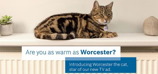 Worcester the cat