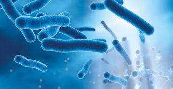 An image of the Legionella bacteria