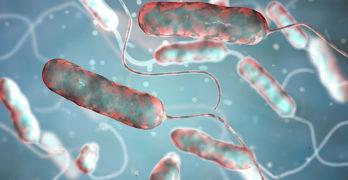 legionella_bacteria_image